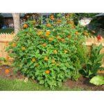 jardin mexicain TOP 11 image 1 produit
